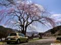 お昼ゴハンは桜の下で_120405