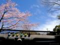 お昼ゴハンは桜の下で_120406