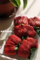 静岡イチゴの紅ほっぺ_121231