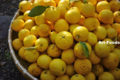柚子の収穫_131231