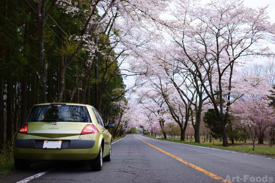 富士宮市山宮-県道180号線の桜_140414