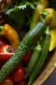 菜園のヤサイたち_140813