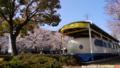 公園の0系新幹線と桜_150330