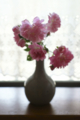 出窓の薔薇_160522
