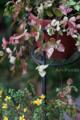 エントランスの鉢植_160727