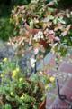 エントランスの鉢植え_160815