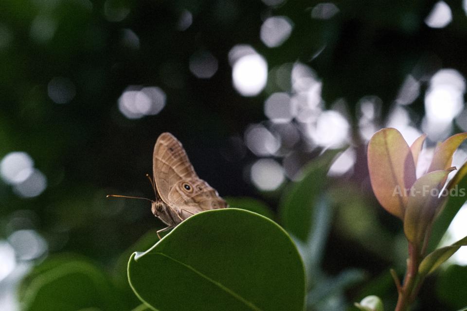 タテハチョウの休息_160911