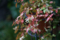 庭の草花_160913-1
