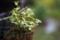 庭の草花_160913-3
