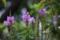 庭の草花_160913-4
