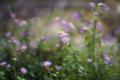 庭の花_161030