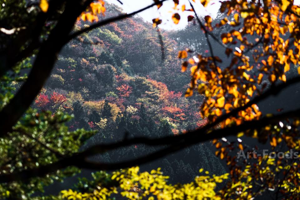 梅ヶ島温泉の紅葉-2_161113