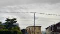 雨天の電線に鳥集合_161119_0756