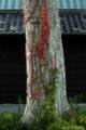 蔦のカラーパレット_161203-2