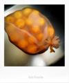 柚子湯_170109