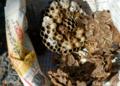 スズメバチの巣その後_170225
