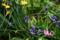 雨の花壇_170401