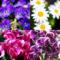 春の花たち_170402