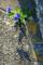 根性系ヴィオラ_170414