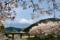 桜と富士山@富士宮市内房_170416