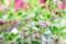 満天星ツツジの花蕾_170423