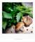 青菜と椎茸_170423