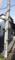 螺旋の蔓植物_170528