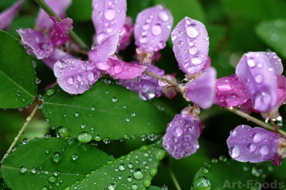 マメ科の植物の花_170608