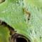 ケロ助のアタマに尺取虫_170628