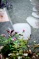 雨の庭_エントランス_170812