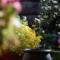 黄色い鉢植え_171008