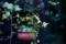 雨の庭_カーポートのアイビイ_171021