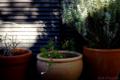 庭風景-ベランダの鉢植え_171217