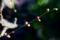 梅の蕾_171229