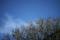 正月の庭風景_180104_梅の花蕾