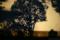 樹々の影絵_180114_DSC06755_IDC-NXT-CS3-8b-afd