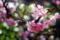 満開の梅その1_180304