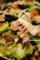 つるしベーコンで野菜炒め_180317
