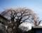 岩本の枝垂れ桜_180318