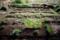 早春の菜園_180318