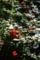 ボケの花_180401