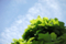 庭風景-柏_180506