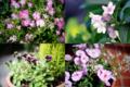 庭の花々_180512-13