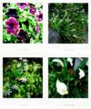 雨上がりの庭風景_1806
