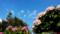 ご近散歩で紫陽花_180619