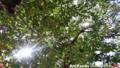 葉桜の木陰で蝉時雨_180807