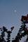 薄明西の空に半月_180901