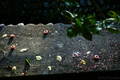 落ちた柿の実_180902