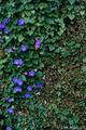 石積みの花_181015