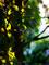 庭風景_181101-バブリイ斜陽楓